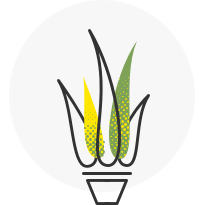 icon-seed-supply.png